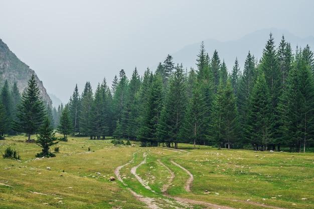山のもみの間の未舗装の道路と大気の緑の森の風景。針葉樹の端の森と軽い霧の中の岩のある風景。明るいもやの中の針葉樹や岩を眺める。山の森