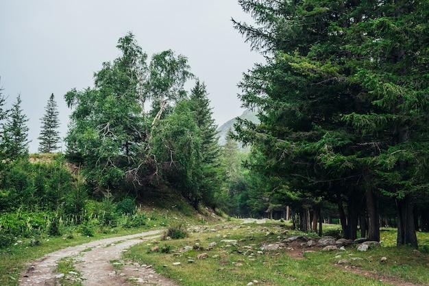 山のもみの間の未舗装の道路と大気の緑の森の風景