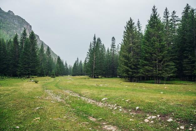 산에서 전나무 사이 비포장 도로와 대기 녹색 숲 풍경.