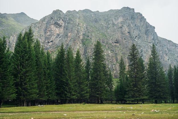 山にモミのある大気の緑の森の風景ミニマリストの風景