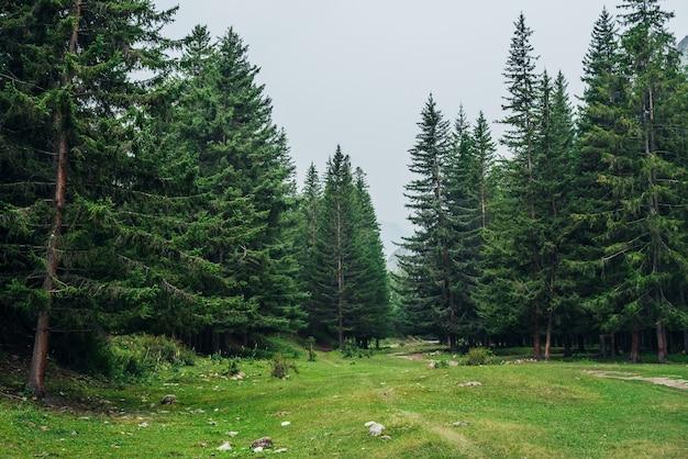 山にモミのある大気中の緑の森の風景。