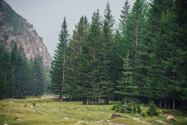 산에 전나무와 대기 녹색 숲 풍경입니다.