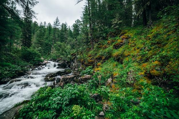 Атмосферный зеленый лесной пейзаж с горным ручьем в скалистой долине.