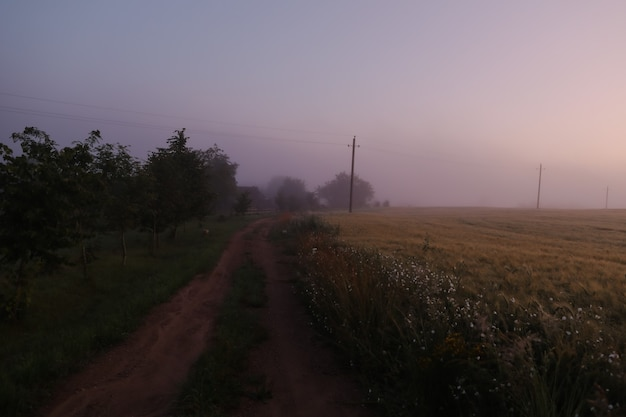 Атмосферное туманное луговое поле и летний пейзаж на рассвете