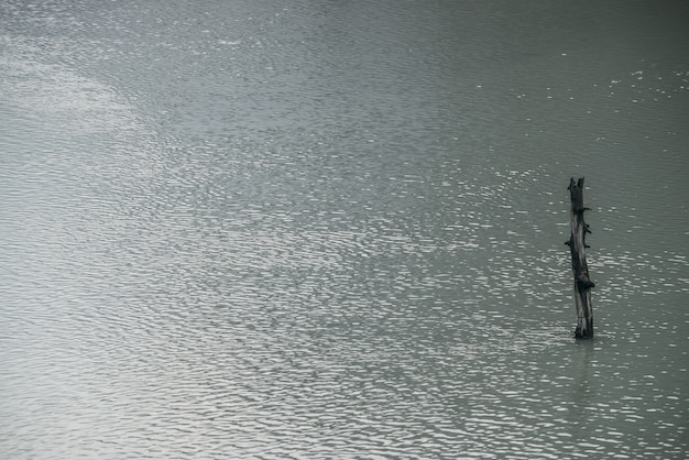 Atmospheric nature background with tree trunk in shiny lake water surface with ripple. one snag in gray water of mountain lake. minimalist nature backdrop of silver water surface with alone snag.