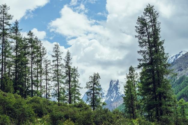 曇り空の下の針葉樹林の背後にある素晴らしい美しい雪山のある大気の自然の風景。どんよりした日の緑のモミのてっぺんの後ろに氷河がある大きな山頂のある劇的な風景。