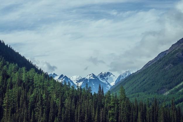 曇り空の下の針葉樹林の背後にある素晴らしい美しい雪山のある大気の自然の風景