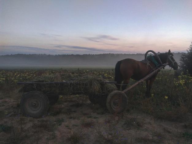 村の日の出の馬の大気写真
