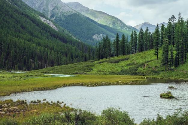 高山湖と山の谷の針葉樹林のある大気の風景。斜面に針葉樹があり、水面に波紋がある劇的な緑の風景。山の中の美しい野生の場所。