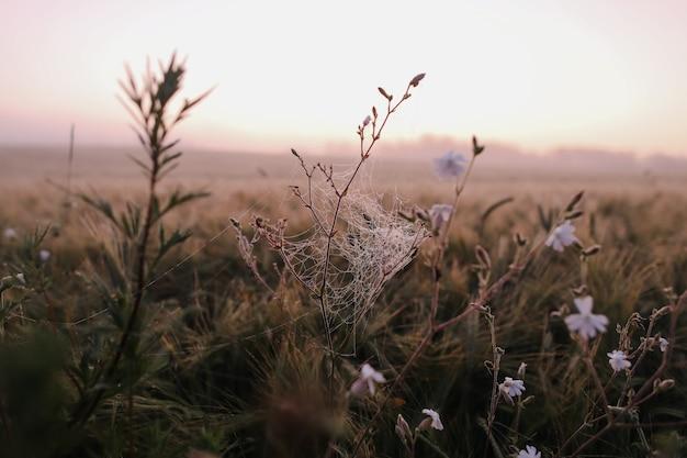 Атмосферное живописное луговое поле и летний пейзаж на рассвете