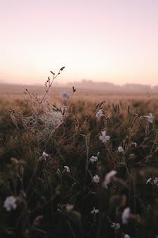 Атмосферное живописное луговое поле и летний пейзаж на рассвете Premium Фотографии