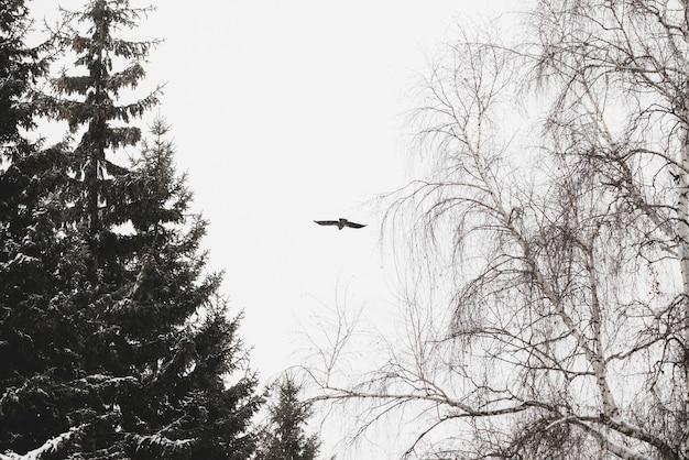 Атмосферный зимний пейзаж с черным вороном, летящим над деревьями