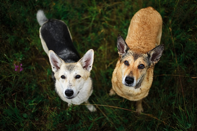Внимательные собаки, стоящие вместе на зеленом лугу