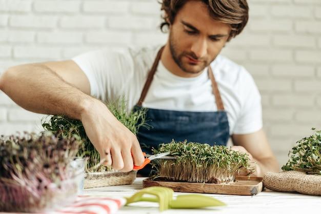 魅力的なひげを生やした男性の農家が彼の場所でマイクログリーンの芽の世話をしている