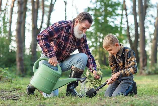 Attractive bearded senior grandfather with his lovely grandson on green lawn planting oak seedling and pour with water.