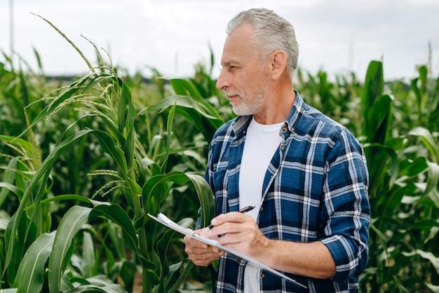 魅力的な農家がトウモロコシの収穫を評価する