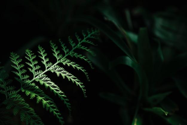 Attractive green leaf on dark background