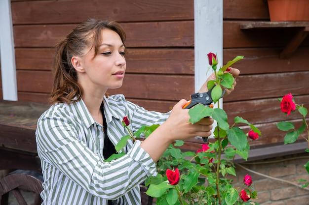 魅力的なセクシーな若いブルネットの女性は庭の庭のはさみでバラをカットします