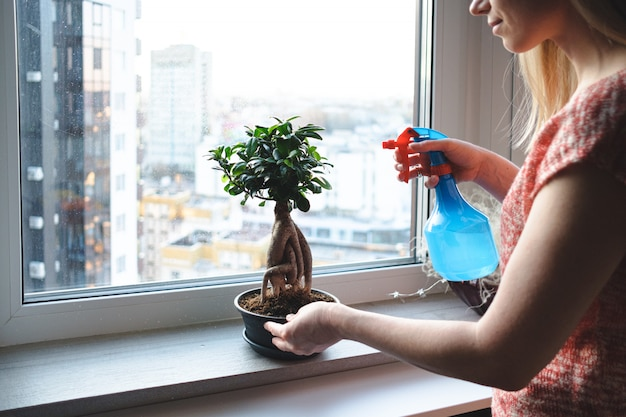 Attractive woman watering a bonsai tree in the apartment