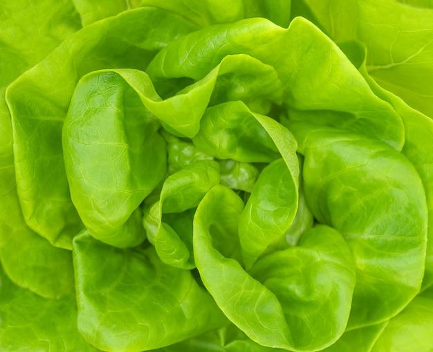 Красивый фон из зеленых листьев салата Premium Фотографии