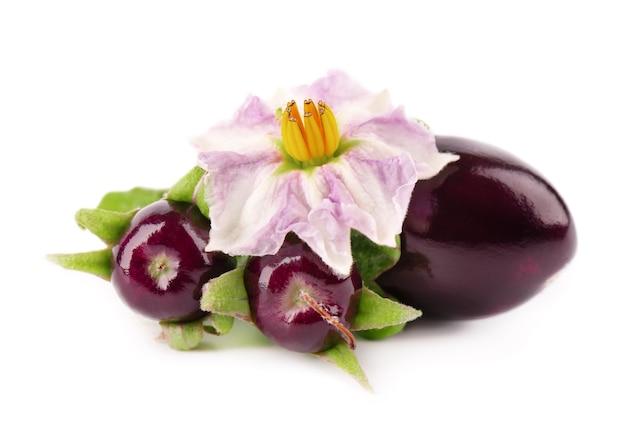 Aubergine with aubergine flower, isolated  . eggplant vegetable.