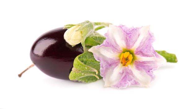孤立した茄子の花と茄子。なす野菜。