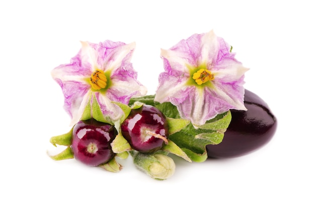 Aubergine with aubergine flower, isolated on white
