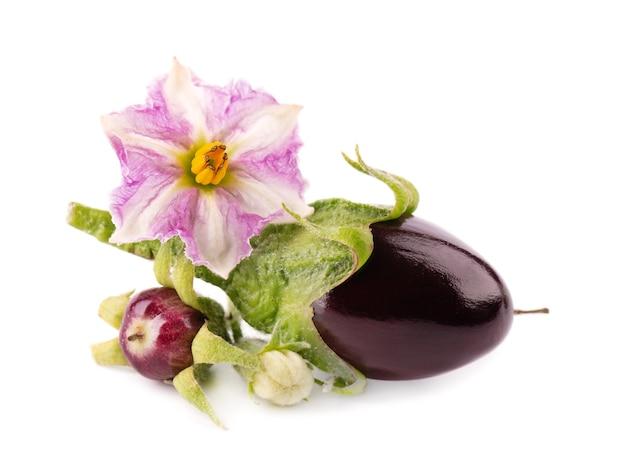 Баклажан с цветком баклажана