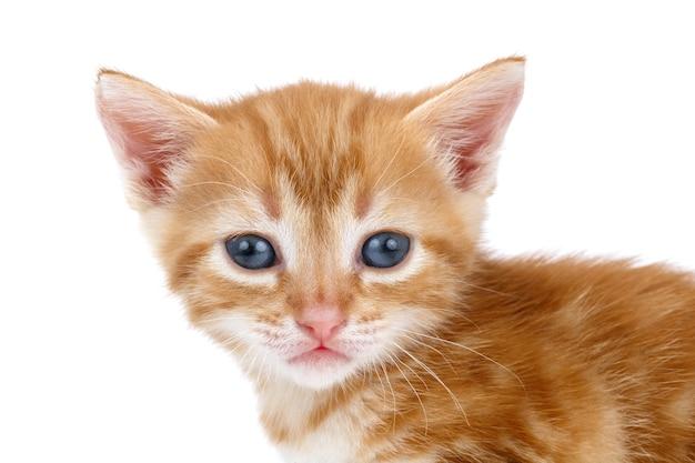 흰색 표면에 적갈색 줄무늬 고양이