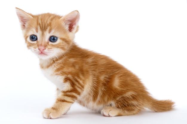 Рыжий полосатый котенок сидит на белой поверхности.
