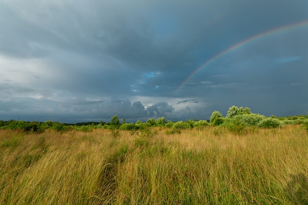 Августовское поле с тяжелыми темными тучами после дождя.