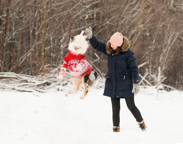 Australian shepherd in christmas sweater jump and play in winter forest.