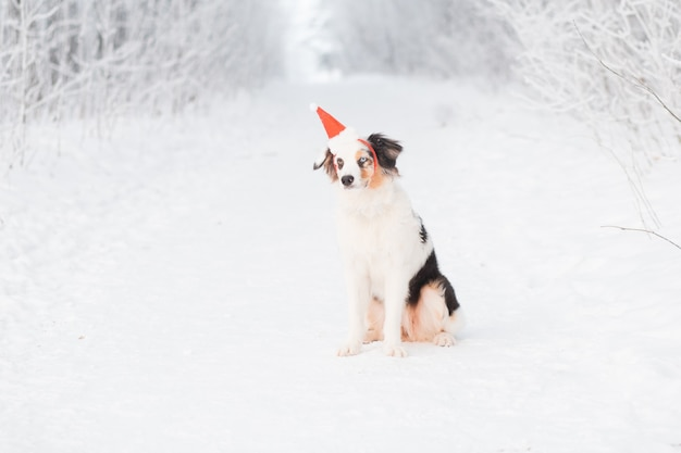 겨울 숲에 앉아 산타 모자에 호주 목 자