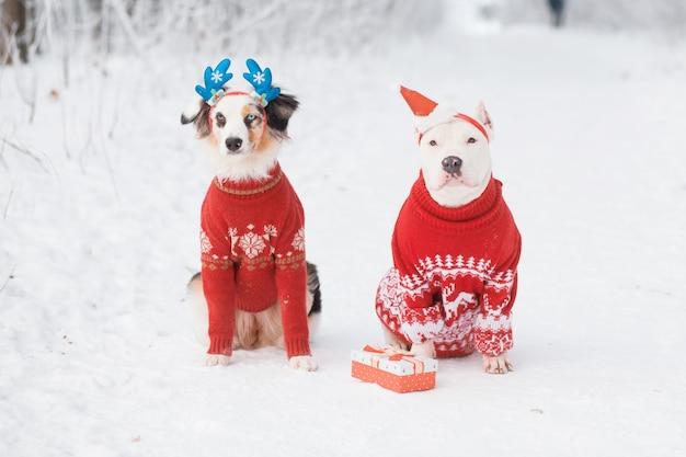 Австралийская овчарка сидит в шляпе санты с американским бульдогом в ободке из оленьих рогов в зимнем лесу. рождественский свитер. творческое рождество. фото высокого качества