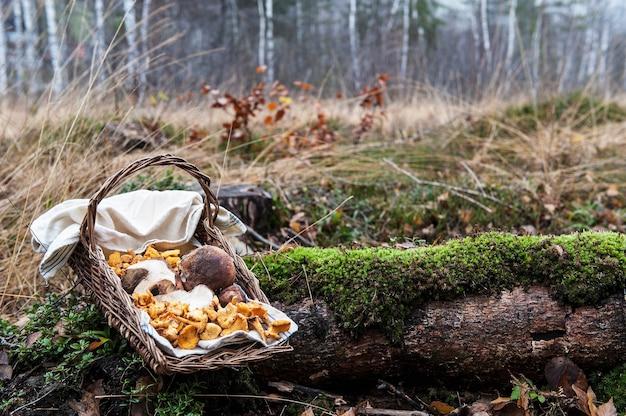 かごの中のオーストリアの森のキノコ