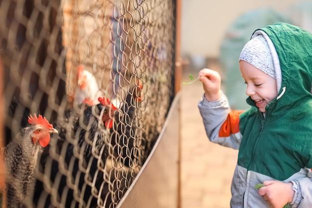 Подлинный снимок счастливого маленького улыбающегося мальчика, который кормит домашних кур во дворе
