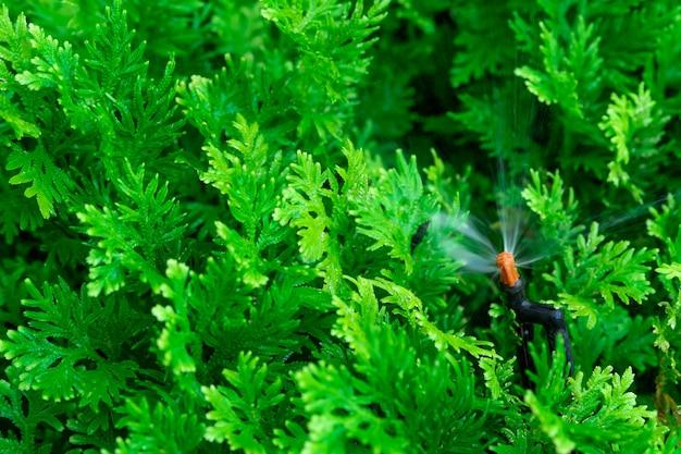 緑の植物に水をまく自動芝生スプリンクラー。自動システムを備えたスプリンクラー。