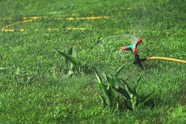 자동 스프링 커. 잔디밭 잔디 급수.