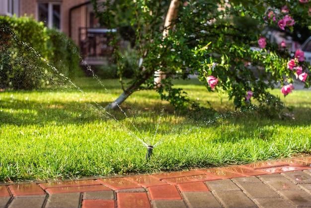 草に水をまくための自動スプリンクラー。芝生は夏に水をまきます。家に便利。夕日のタチアオイの花