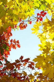 オーチュマンの葉が木にぶら下がっています。