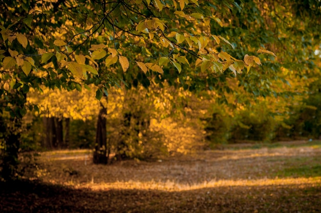 Autumm leave and blurred nature . colorful foliage in the park. falling leaves natural  .autumn season