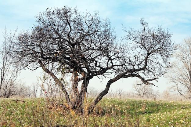 秋。裸の枝のある木