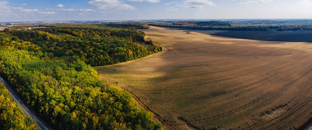 Autumn aerial panoramic drone countryside corn field and forest