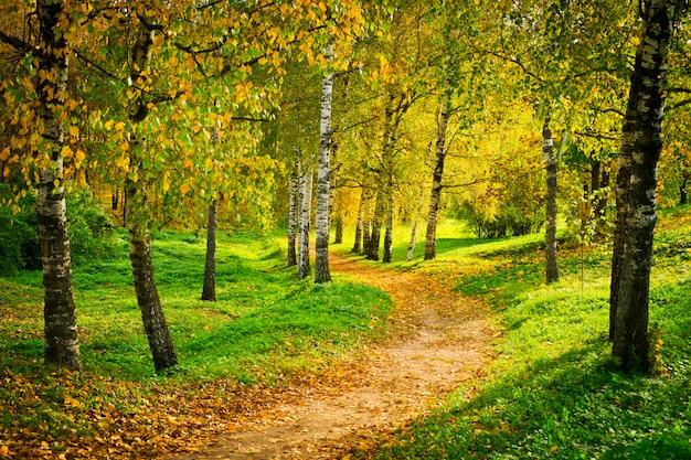 Осенняя аллея, полная листьев