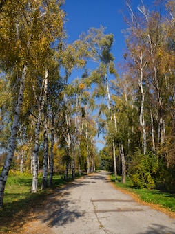 Autumn alley in the park. rural landscape. alley with shadows in the summer park.