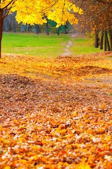 落ち葉のある秋の路地