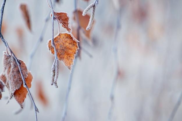 霜で覆われた白樺の葉、コピースペースと秋と冬の背景
