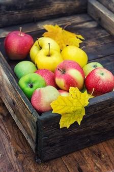 Autumn apple in rural style.