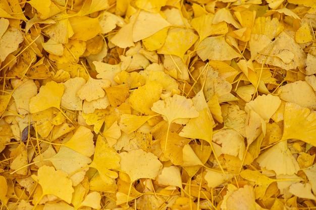 Осень. осенний фон. вид сверху опавшие желтые листья. крупный план.
