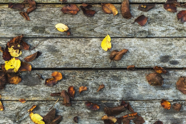 Autumn background composition on old wooden background. fall, autumn leaves on barn board with moss wooden texture vintage background. copy space, flat lay, top view.